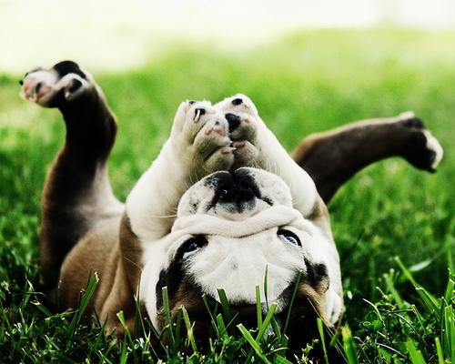 Смешные фото животных (11 фото)