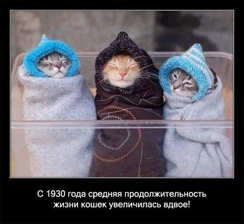 Интересные факты из жизни кошек (56 фото)