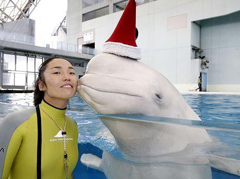 Предновогодние дельфинчики :) (3 фото)