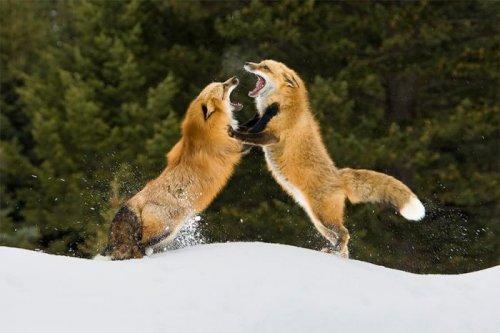 Смешные фото животных (22 фото)