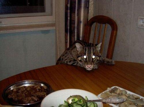 кот рыболов в квартире