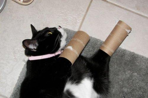 Забавные кошки (17 фото)