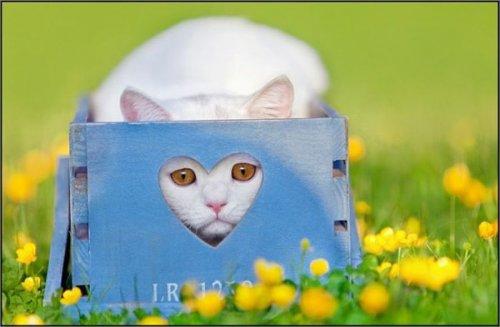 Кошачий позитив (17 фото)