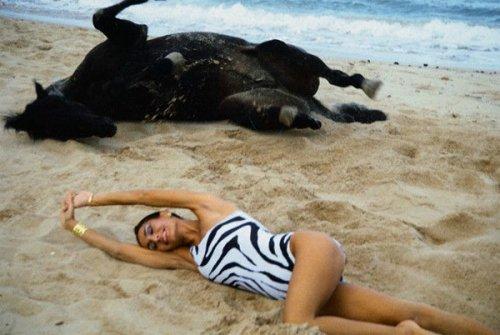 Смешные фото животных (17 фото)