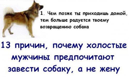 Собака - лучший друг мужчин (13 фото)