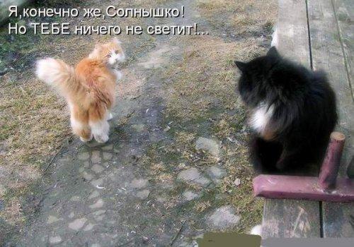 Зоопозитив про кошек (14 фото)
