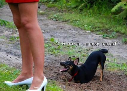 Потешные животные (14 фото)