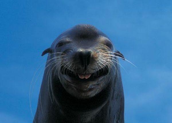 Днем года, морской котик фото прикольные