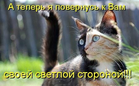 Забавные коты (видео)