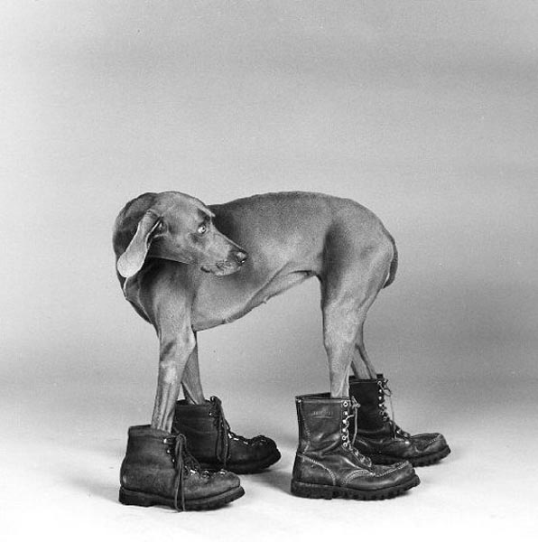 the important events in the life of william wegman