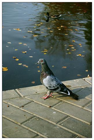 Животные осенью (22 фото)