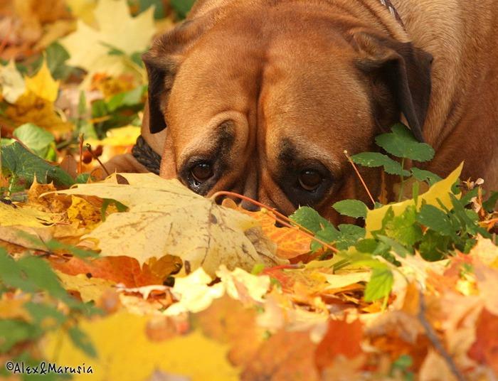 Животные осенью 22 фото клопик ком