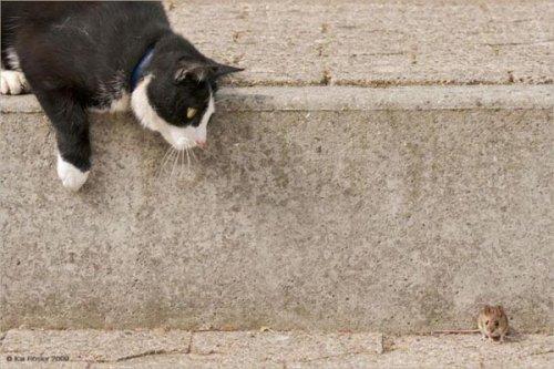 Смешные кошки (20 фото)
