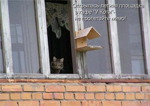 Забавные животные (16 фото)