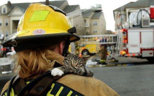 Кот Василий награжден за спасение людей на пожаре (видео)