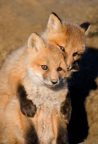 Эти забавные животные (29 фото)