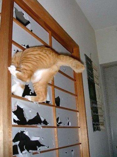 Забавные кошки (18 фото)