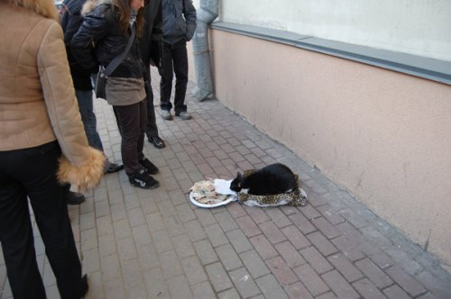 Подайте на рыбу и мясо коту Барсику