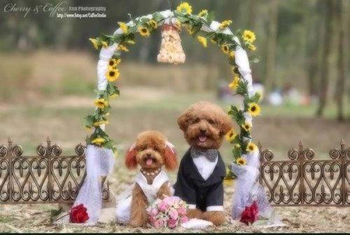 Собачья свадьба (19 фото)