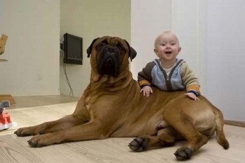 Дети и собаки (33 фото)