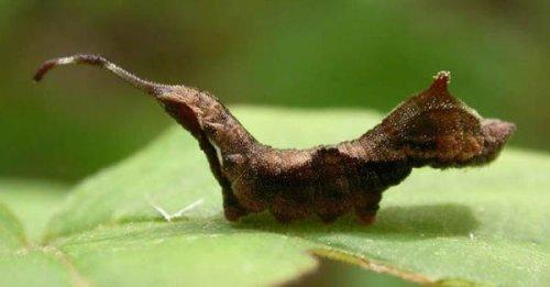 Необычные гусеницы (10 фото)