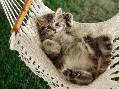 Ох уж эти кошки (29 фото)
