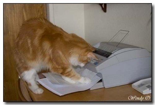 Кото-факс