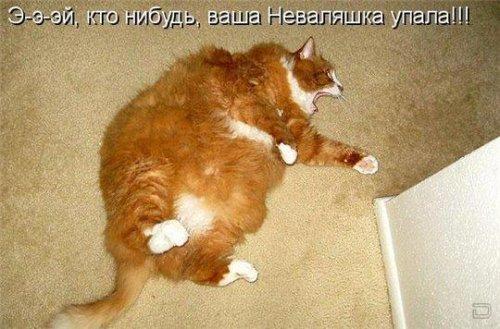 Забавные животные (25 фото)
