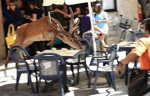 Дикие животные на улицах городов (17 фото)