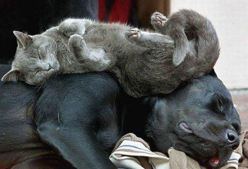 Собаки и кошки в одной обложке (16 фото)