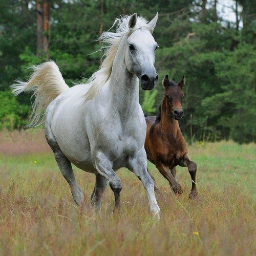 Лошадки (22 фото)