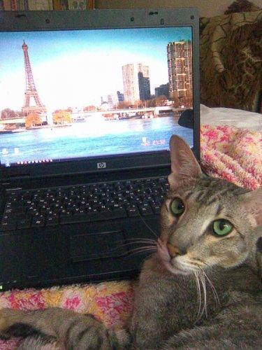 Кошки и компьютер .  2 часть . (15 фото)