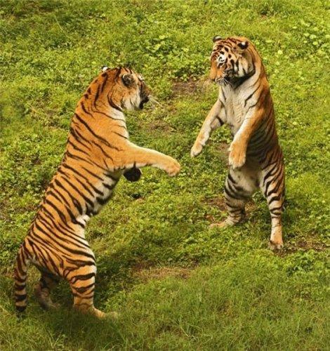 Прикольные животные (19 фото)