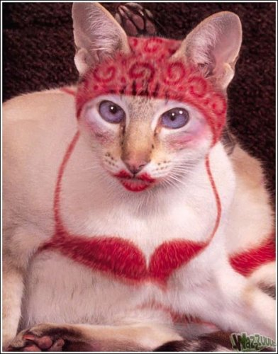 Раскрашенные кошки (46 фото)