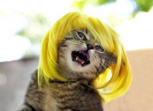 Гламурррр (ные) кошки (8 фото)