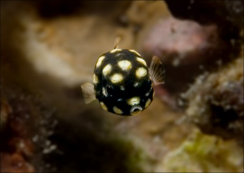 Жизнь под водой (13 фото)