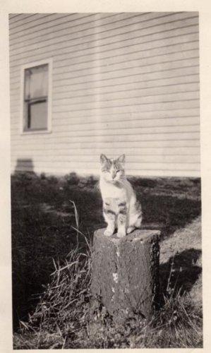 Винтажные кошки (42 фото)