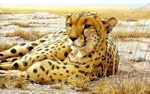 Рисунки с животными (17 фото)