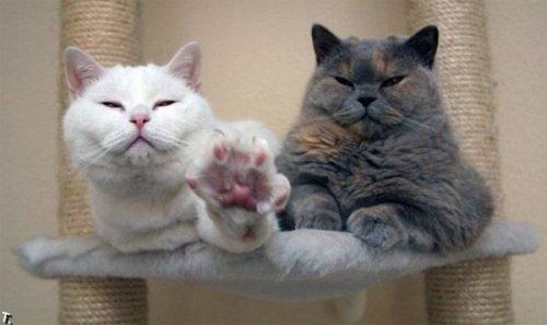 Ох уж эти кошки ( 25 фото)