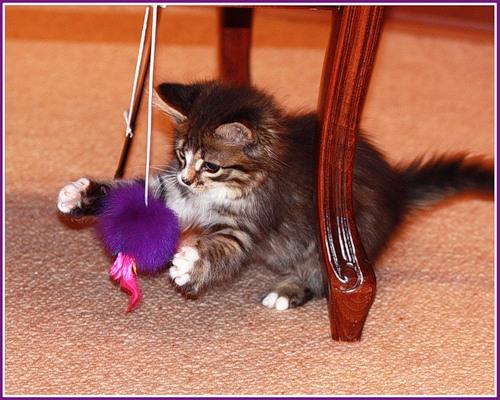 Подборка семейства кошачьих (15 фото)