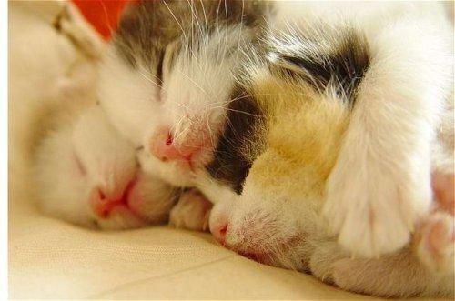 Новорожденные котята (8 фото)