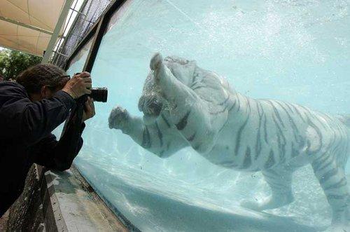 Подводная охота (13 фото)