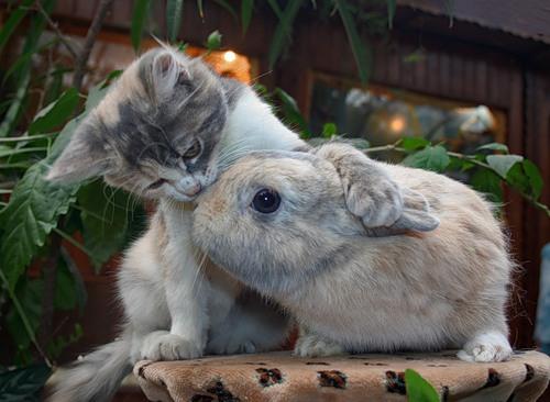 Нежный,ласковый друг (12 фото)