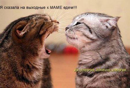 Смешные фото животных с надписями 22
