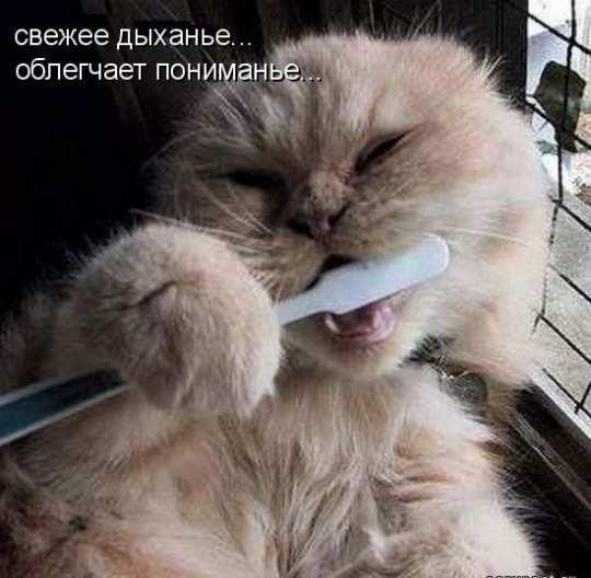 Фото приколы с надписями смешные:
