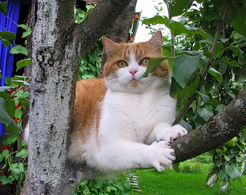 Большие и маленькие кошки (20 фото)