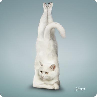 Йога-кошки (13 фото)