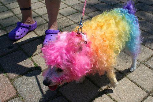 Покрашеные собаки (15 фото)