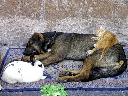 Cпят усталые зверюшки (18 фото)