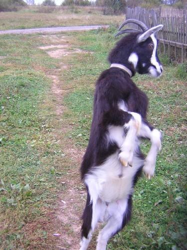 Танцующие животные (13 фото)